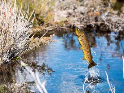 Start shooting for 2017-18 Tasmania Trout Fishing Photo Competition